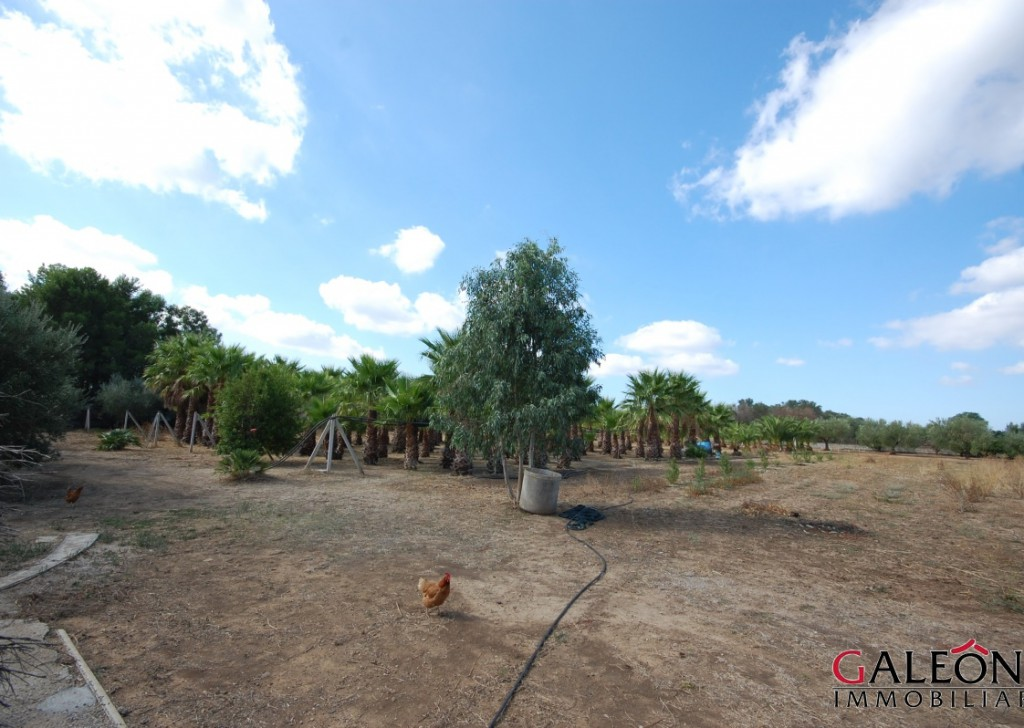 Sale Land Casarano - Entirely fenced agricultural land for sale  Locality